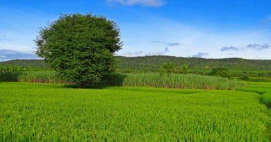 Actividades agrícolas e relacionadas