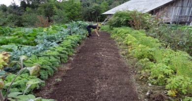 Calendário agrícola - trabalhos na horta