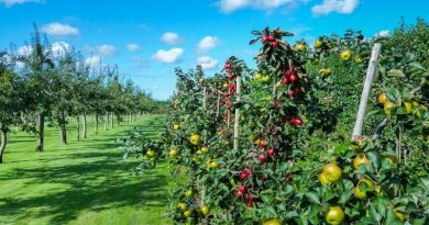 Calendário agrícola - trabalhos no pomar