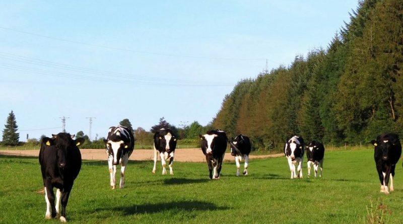 Em Abril, actividades agrícolas e outras