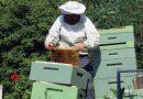 Apiário - criação de abelhas ao longo do ano