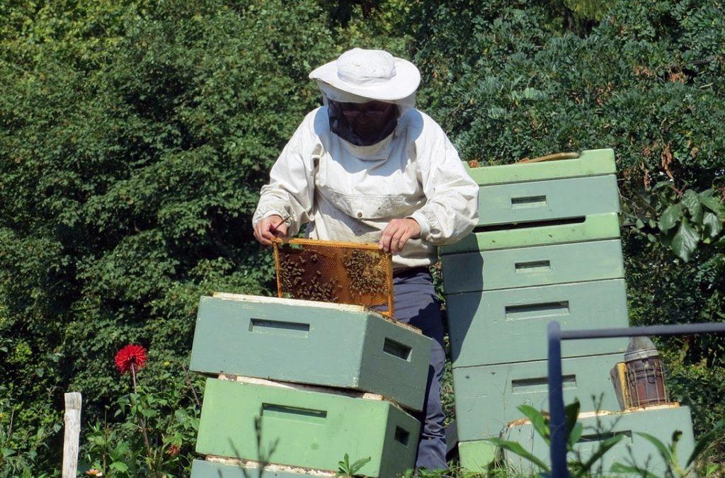 Actividades no apiário ao longo do ano