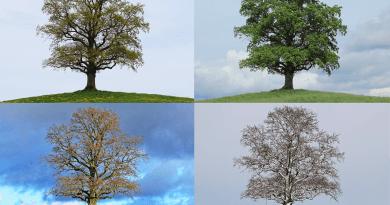 Estações do ano - Primavera - Verão - Outono - Inverno