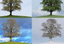 Duração do ano - As estações - Primavera - Verão - Outono - Inverno
