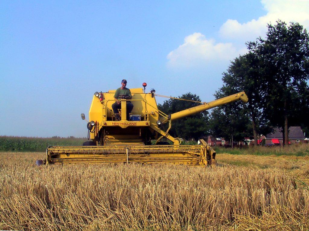 Atividades agrícolas e outras em Agosto