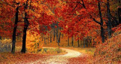Mês de Outubro. As folhas das árvores mudam de cor e começam a cair!