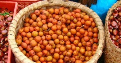Períco dos Santos - fruto autóctone de Valença, um produto referência na Feira dos Santos