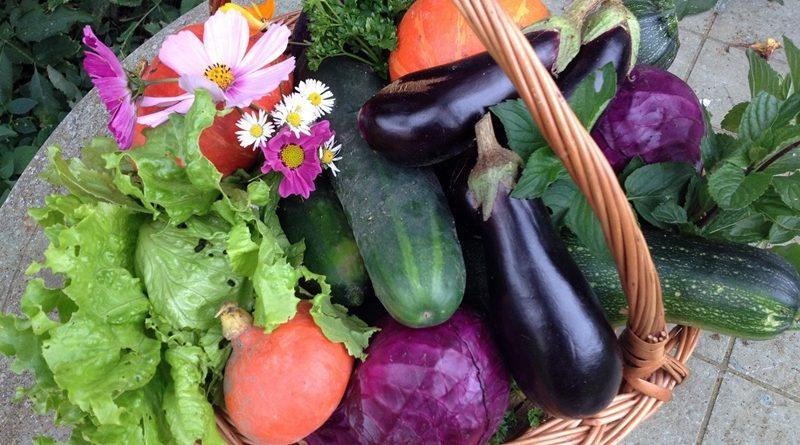 Sugestões do que semear na horta durante o mês de Outubro