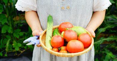 Já sabe o que pode semear na sua horta em Novembro?