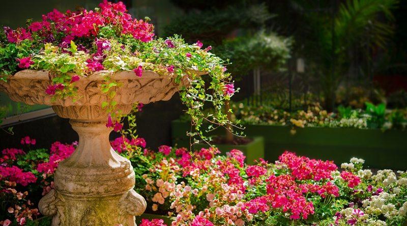 Sugestões do que plantar no jardim, em Outubro