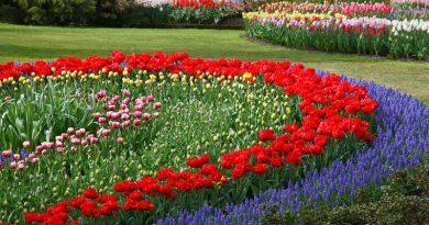 Que flores devo semear no jardim, em Outubro