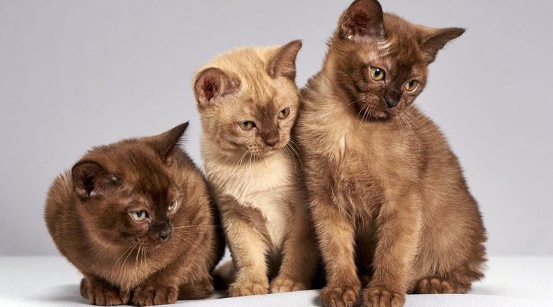 Apesar de odiados, temidos e queridos em partes iguais, os gatos são a mascote mais misteriosa da humanidade