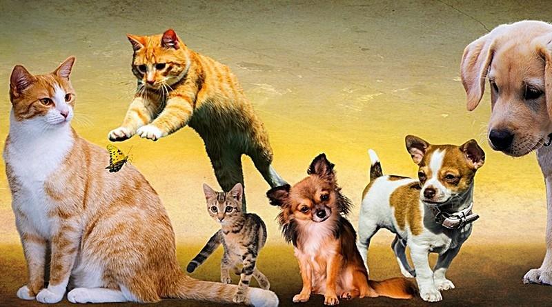 Cães e gatos – factos interessantes e algumas curiosidades