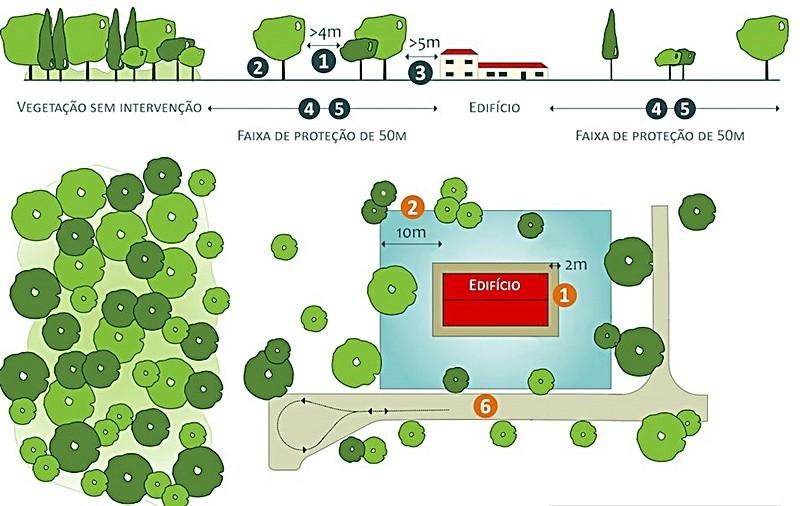 Limpeza das Florestas - Esquema simplificado do que deve ser feito no âmbito da legislação