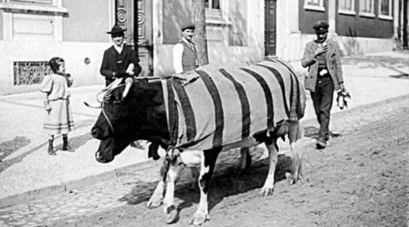 Arganilenses foram leiteiros em Lisboa. Distribuição de leite em Lisboa.