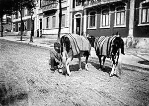 Arganilenses foram leiteiros em Lisboa
