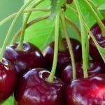 Em maio surge a época das cerejas, apetitosas!