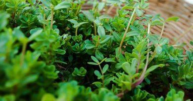 Há plantas com propriedades extraordinárias