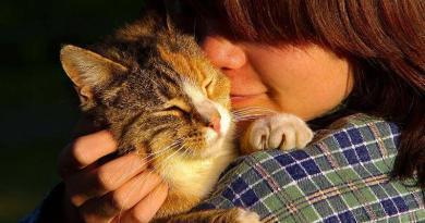 Animal de estimação: gato!