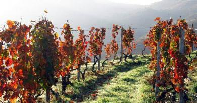 NERVIR faz sua a voz dos produtores de vinho da região do Douro, seus associados!