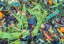 A adubação verde é muito importante na agricultura biológica