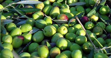 Azeitonas de Elvas | Produtos regionais de Portugal