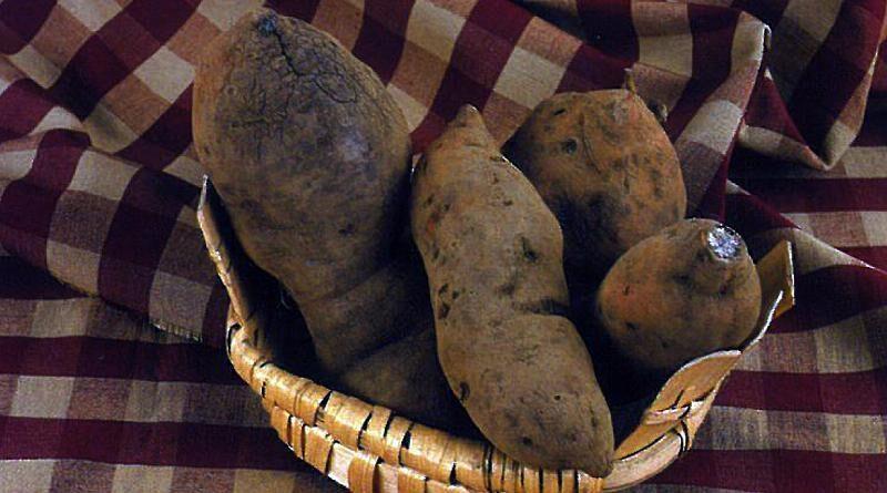 Batata-doce de Aljezur | Produtos regionais