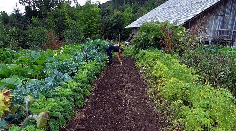 Rotação de culturas e famílias de hortícolas