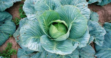 Saiba o que semear e plantar na horta e no jardim em Dezembro