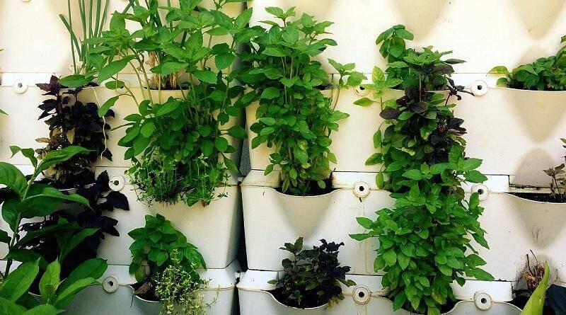 6 ervas aromáticas para usar nos cozinhados!
