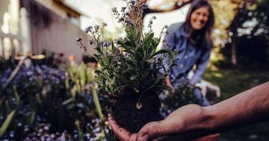 Jardinagem - semear e plantar no jardim em Dezembro