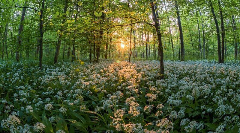 Floresta - O património vegetal à disposição da humanidade