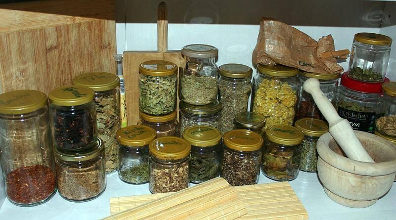 As utilidades do imenso património vegetal existente
