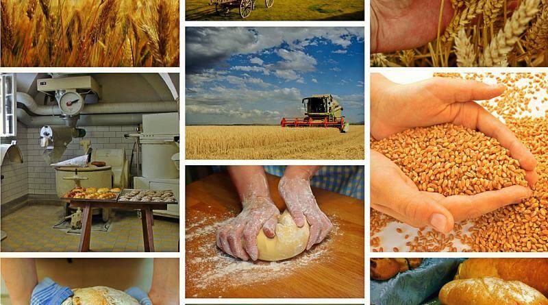 A epopeia do pão ou dos cereais e a humanidade!