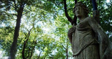 A mitologia e as plantas: flores e árvores